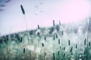 allergen grass pollen