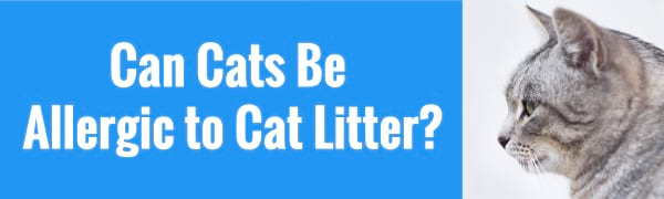 can cats be allergic to cat litter