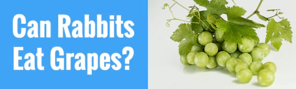 can rabbits eat grapes
