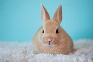 rabbit on carpet
